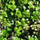 Birch Bio 1 Kg